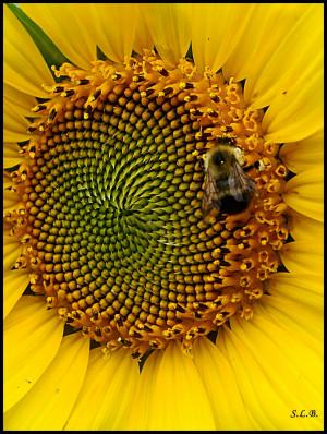 Sunflower [Listen to the post below ]