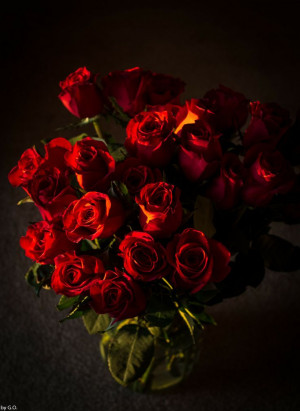 Red roses George Oancea