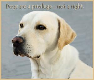 To a child and to a dog a new day is a miracle of infinite ...