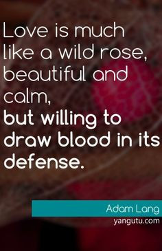 Love is much like a wild rose, beautiful and calm, but willing to draw ...