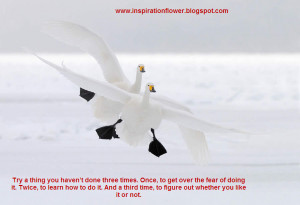 beautiful birds wallpapers with inspiration quotes part 2