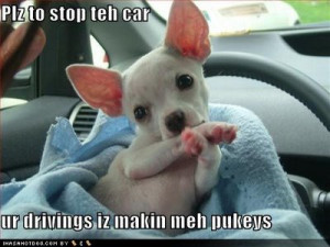 funny dog quotes blog, funny dog quotes about food, funny dog videos.