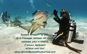 aren't so bad! Funny little shark humor! Diving quotes, shark quotes ...