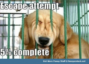 ... ://funnyasduck.net/wp-content/uploads/2012/09/funny-dog-jail-pic.jpg