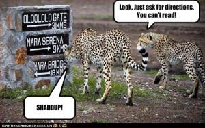 cheetah funny cheetah pictures cheetah picture cheetah photos cheetah ...