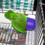 funny parrot quotes5