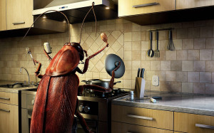 funny cool cockroach wallpaper