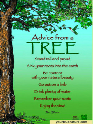 Advice-from-a-tree2