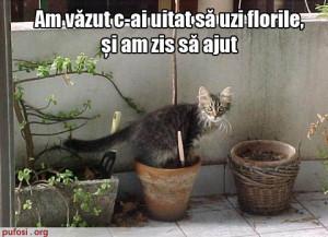 poze-amuzante-pisica-urineaza-in-flori - poze amuzante cu pisici