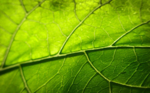 Vegetation HD Wallpapers Set 1