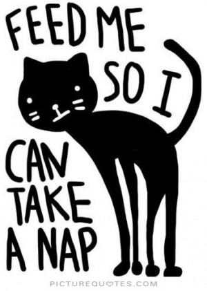 Funny Quotes Cute Quotes Sleep Quotes Cat Quotes Animal Quotes