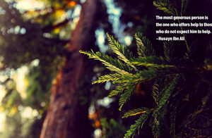 Husayn ibn Ali, islam, Imam Hussain, Imam, Zitate, Bäume, bokeh ...