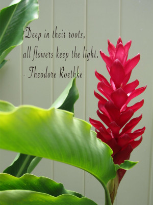 Deep In Their Roots All Flowers Keep The Light Nature Quote