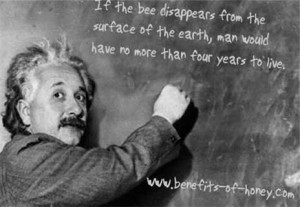 bees-disappear.jpg