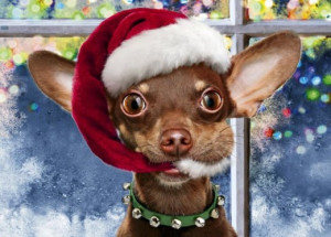 Funny Christmas Chihuahua Dog with Santa Hat