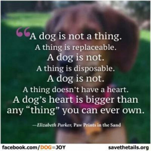 Dog is a Responsibility