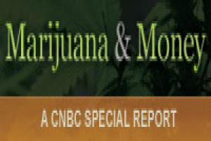 36669473-Marijuana_Money_badge_200x60.600x400.jpg