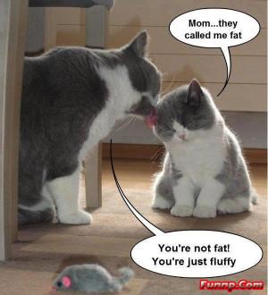 411292010-funny_cat_and_kitten_fat.jpg
