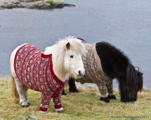 Cute Overload: Miniature horses in cardigan sweaters