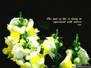 Beautiful Wallpapers With Quotes For Facebook