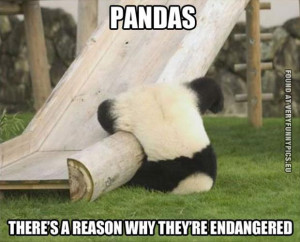 funny picture a reason why pandas endagered
