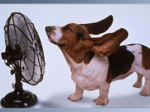 Its too hot here - Funny Dog Picture