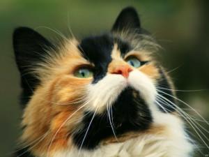 Guardado en: Animales , Gatos