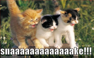 Funny Kittens Photos