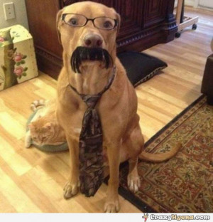 Funny Dog Tie Suit Reading Bookjpg Picture