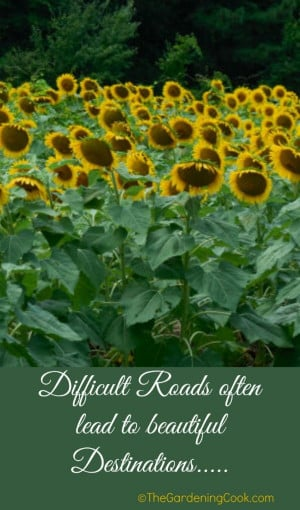 ... inspirational quotes: http://thegardeningcook.com/gardening-quotes-and