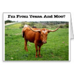 Pictures Of Texas - Hill Country Wildflowers And Longhorns