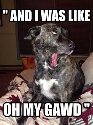 ... Memes, Funny Stuff, Funny Animal, So Funny, Dogs Funny, Animal Funny