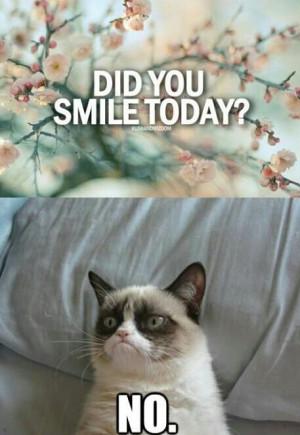 Grumpy Cat Quotes Frozen Grumpy Cat Quotes