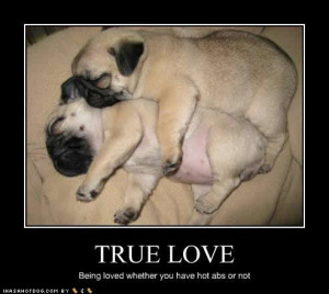 Cute true love of puppies