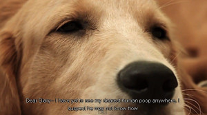 Sad Dogs Quotes 'sad dog diary': depressed