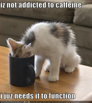 love Coffee. I love Cats. I love ICANHASCHEEZBURGER.COM
