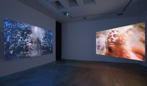 Installation Art Examples Picture