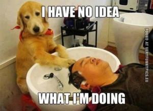 Funny Hairdresser Quotes Just a dog hairdresser