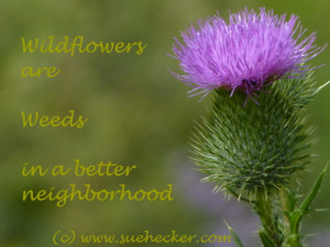 WildflowersWeeds