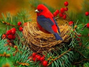 bird is termed