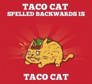 Taco Tuesday Quotes. QuotesGram