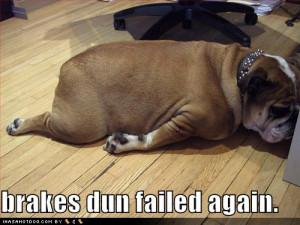 Funniest bulldog life, Funny bulldog life