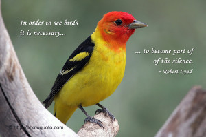 ... See Birds It Is Necessary To Become Part Of The Silenc. - Birds Quote