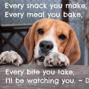 Beagle, eyes, sayings, quotes