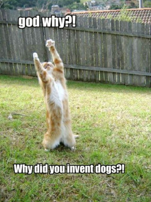 Very funny dogs and cats pictures 4