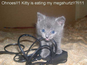 Funny Random Cat Pictures With Quotes | Image 2 of 71.