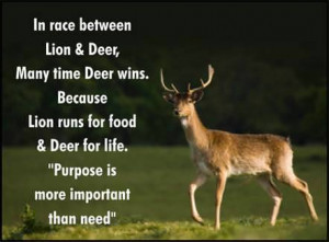 Fuelism #330: Fuelisms : In a race between a lion and a deer, the deer ...
