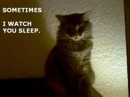 Sometime I Watch You Sleep. ~ Cat Quotes