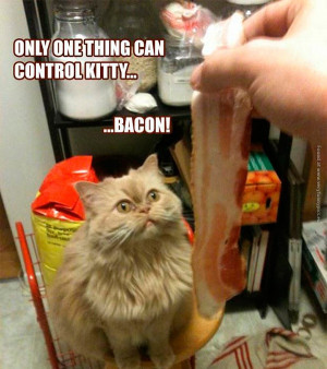 funny-cat-pictures-how-to-control-a-cat-with-bacon