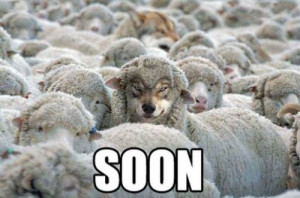 creepy, funny, lol, quote, sheep, wolf